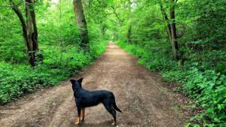 Brasenose Woods