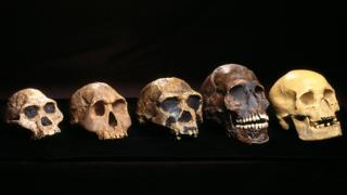 science a row of skulls