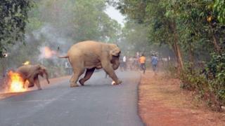 Dois elefantes em chamas atravessam via, enquanto multidão corre ao fundo