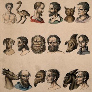 Fisiognomías Humanas junto a Fisiognomías Animales