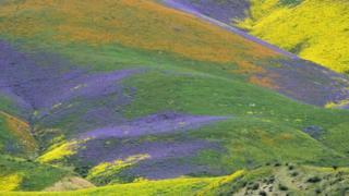 Flores en el desierto de California