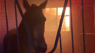 Fire at stable