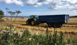 John Deere tractor in field of oats