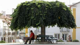 man under tree in portugal
