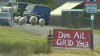 Villagers oppose grid to keep sheep off streets