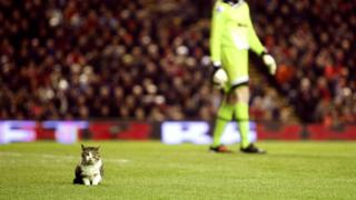 Cat on pitch at Anfield
