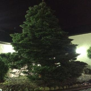 The Christmas tree has been in darkness since it was vandalised