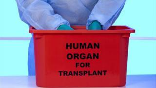Caja para transportar órganos