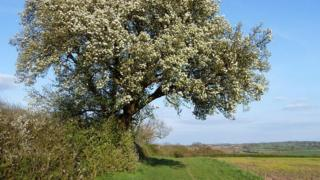 The Cubbington Tree has been deemed the country's favourite in a poll