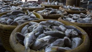 Barrels of fish in Thailand