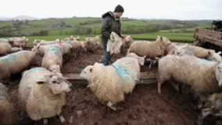 Farm in Brecon Beacons