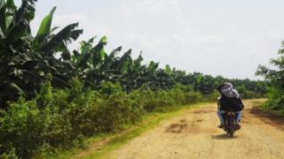 ဝိုင်းမော်မြို့နယ်ထဲက တစ်ရှုးငှက်ပျောခင်းတွေ