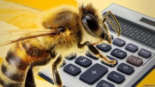 Bee and calculator