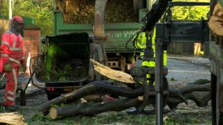 A clean-up operation is under way to clear fallen trees