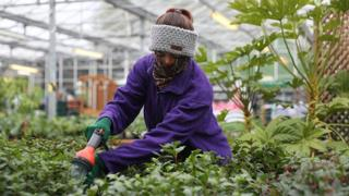 A member of staff waters the plants