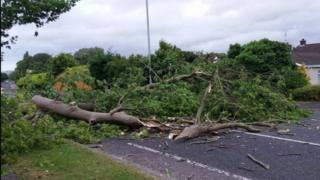 The Aghanloo Road in Limavady was blocked by a fallen tree on Thursday morning