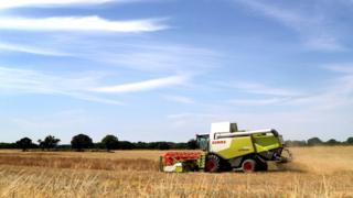 Farm in Ashford Kent in July