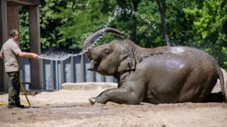 0 A zookeeper sprays water on Asian elephants at the zoo in Berlin, Germany, 25 June 2019