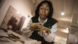 Una investigadora con el cráneo de un perro.