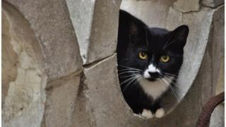 Кіт у бетонній трубі