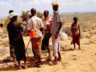 Ukame: Mifugo wengi waangamia Puntland Somalia