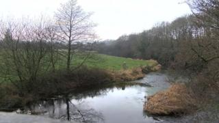 The River Teifi near Tregaron