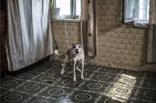 Un perro, la mascota de esta familia, está amarrado en la cocina.