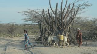 Two women walk alongside a donkey carrying water in La Guajira province