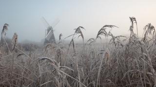 Wicken Fen in Cambridgeshire