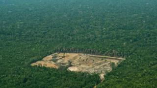 -Aerial-view-of-forest-which-has-been-cleared
