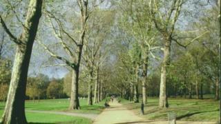 伦敦格林公园的树木