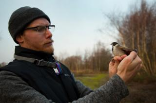 science Paul Perrins holds a reed bunting before releasing it back into the wild