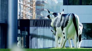 A couple of model cows at Glencore HQ in Switzerland