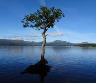 tree at Milarrochy Bay