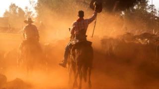 Европейские фермеры боятся конкуренции с ковбоями Амазонии