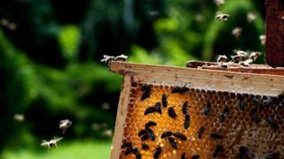 Пчелы и улей