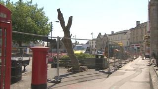 Trees chopped down in Melksham