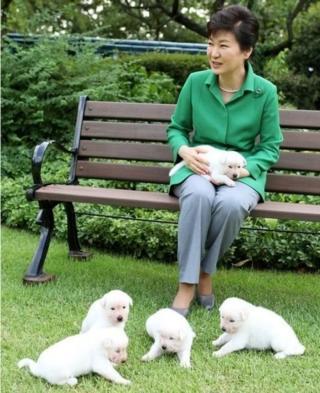 朴槿惠寵物狗
