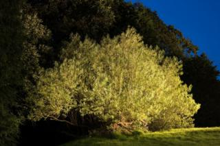 The Ecclefechan tree