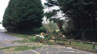 The damaged tree on the A308 in Egham