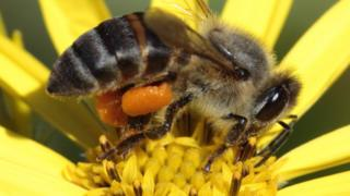 South African bees: 'One million die in Cape Town'