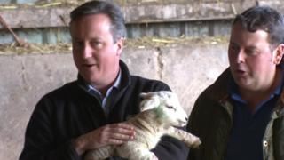 David Cameron holding a newborn lamb during a visit to a farm in Denbighshire