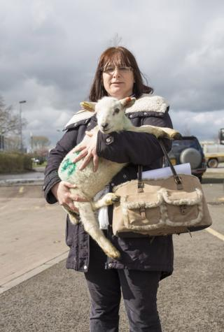 A woman holds a lamb