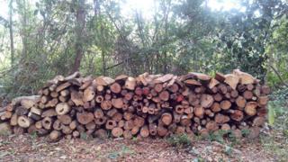 Área de floresta secundária desmatada na região de Bragantina
