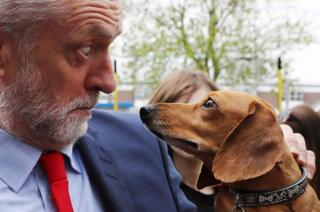 Labour Leader Jeremy Corbyn is startled by Cody the Dachshund during a campaign event outside the James Paget Hospital on 13 May 2017 in Great Yarmouth, England.