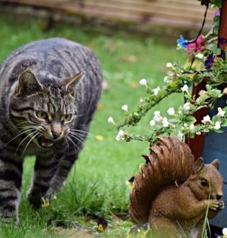 A visiting cat in Polmont is unsure if this squirrel statue is real