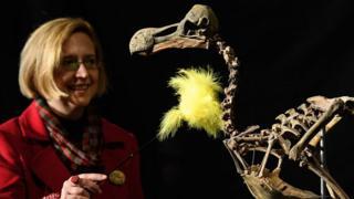 Скелет додо и женщина