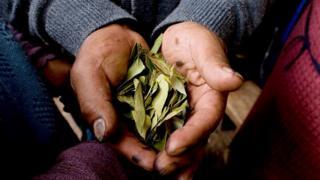 Manos sosteniendo un puñado de hojas de coca