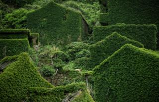 Abandoned village houses covered with overgrown vegetation in Houtouwan on Shengshan island
