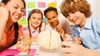 Teengers studying the brain